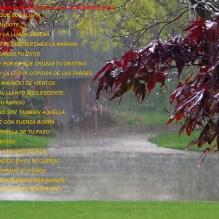 es que soy lluvia (Copiar)